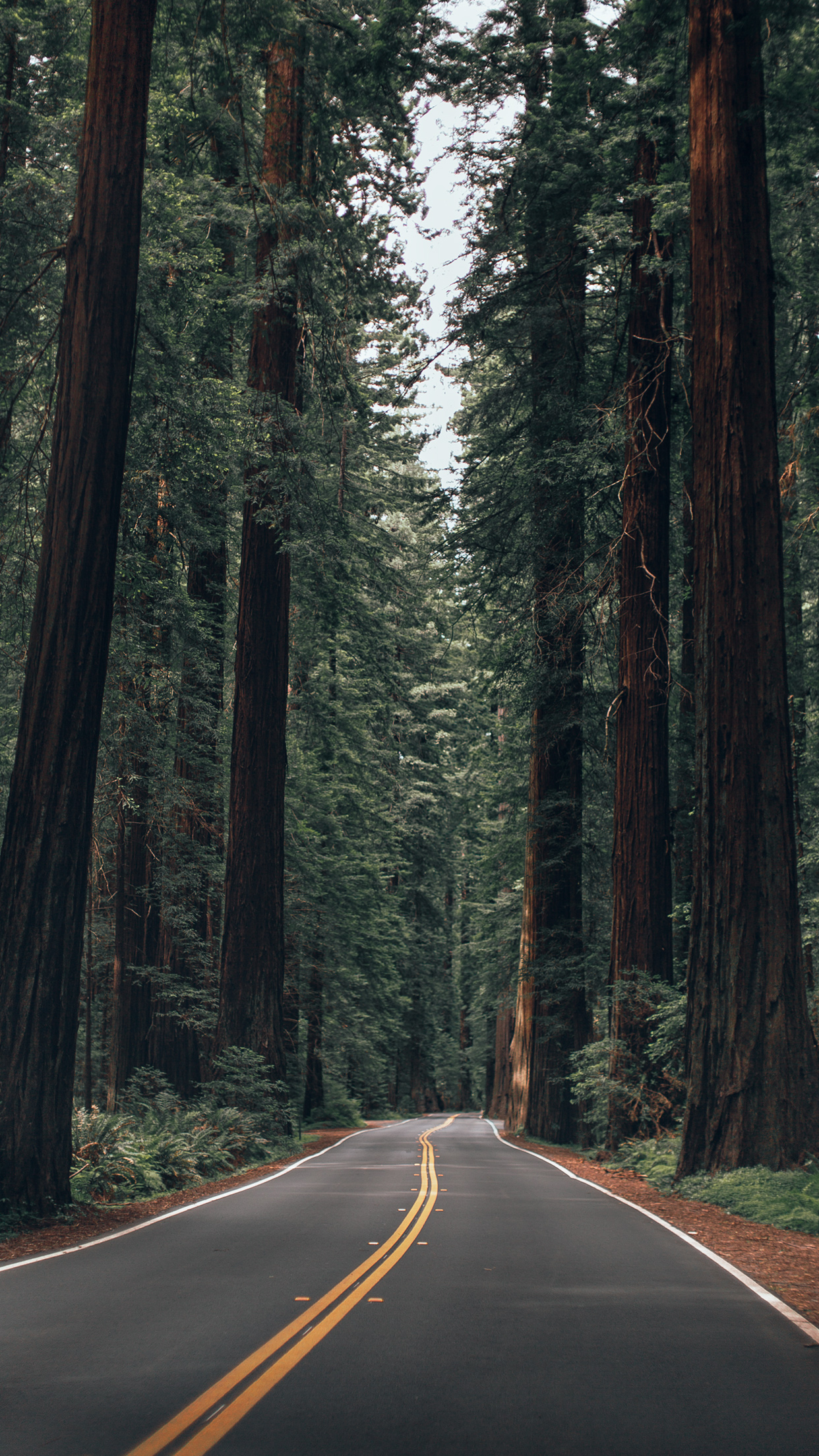 Wallpapers Of The Month California Summer Abe Kislevitz