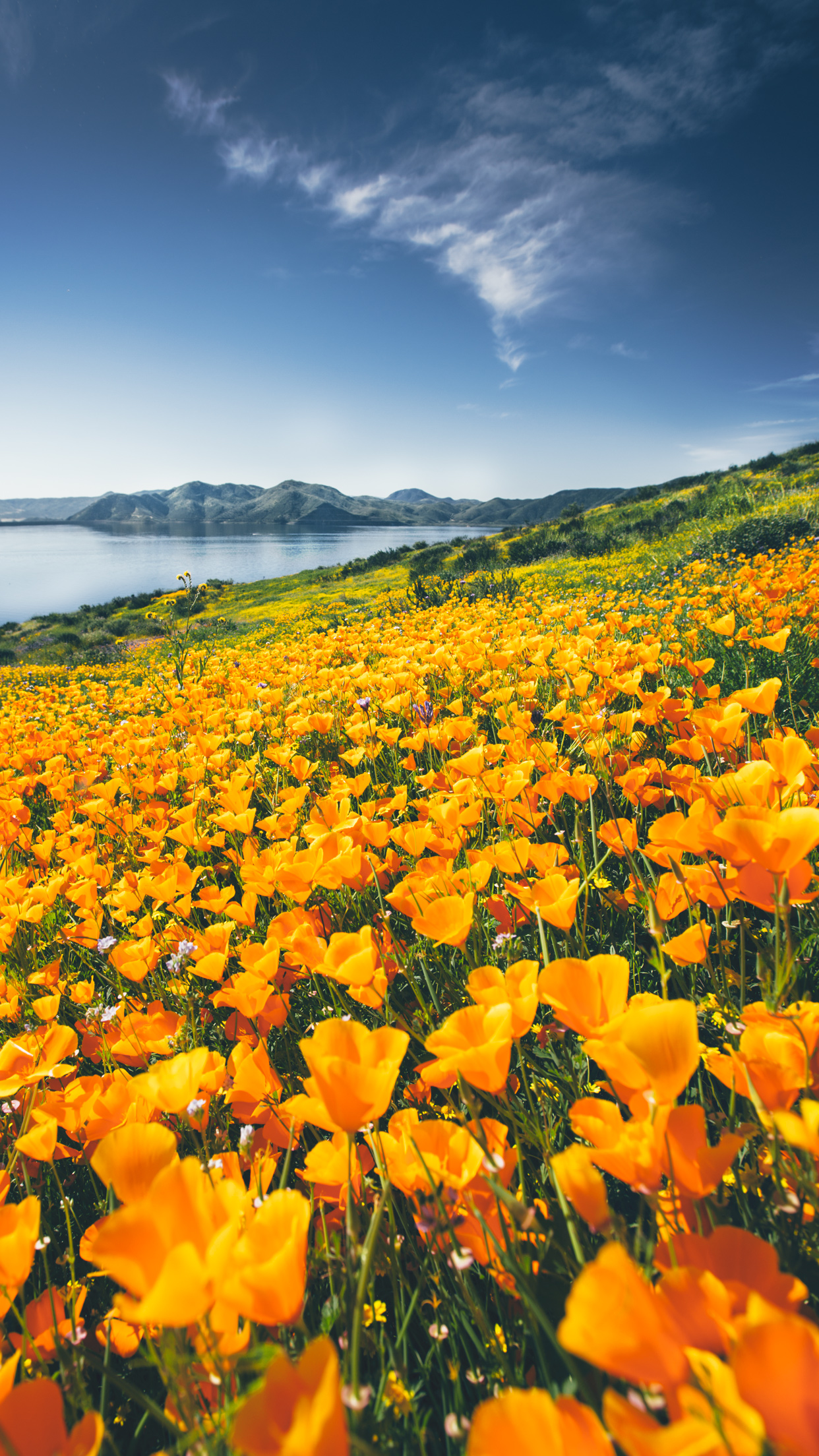 Wallpapers Of The Month Spring Wildflowers Abe Kislevitz